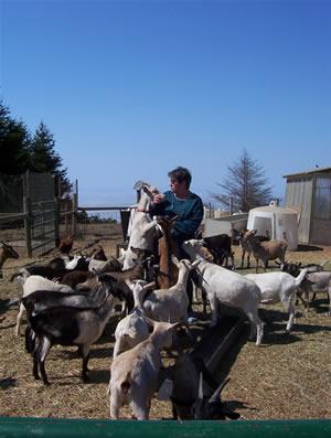100_2217 goats resize 2.jpg
